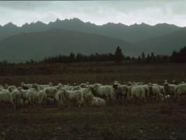 Dia 02-3004 Am Monte Arcuentu 1987
