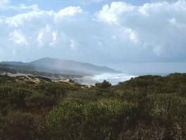 Dia 02-8004 Costa Verde 1994