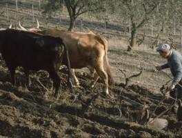 Dia 02-11008 Bei Goni 1992