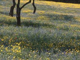 Dia 01-3024 Frühling