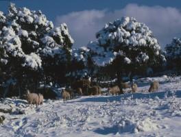 Dia 01-3039 Winter bei Ala dei Sardi