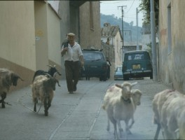 Dia 02-18046 In Barisardo