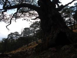 Mai 2008 og 89 Am Monte Terralba