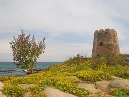 April 2011 366  Torre di Bari