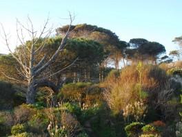 Mai 2012 0511 Isola Caprera