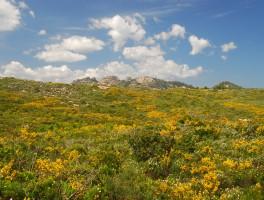 Mai 2012 0559 Punta Martino