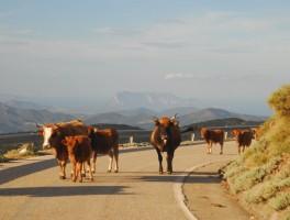 Okt 2012 0790  Am Monte Albo